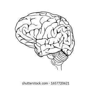 Brain in side view in line art style.