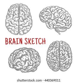 Brain Sketch Images, Stock Photos & Vectors | Shutterstock