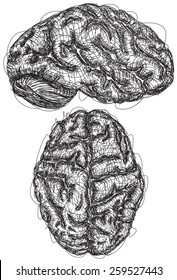 Brain Sketches A sketch of the top and side view of a brain