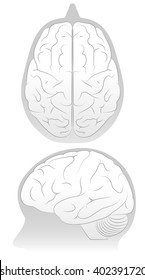 Brain in Skull form two angles