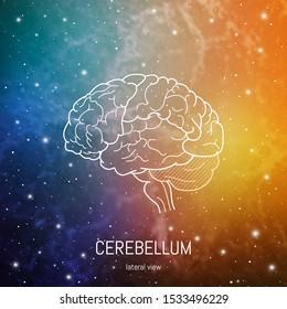 Brain structure. Cerebral cortex, Cerebellum and brain stem scientific medican neuro biology illustration in front of outer space futuritic background