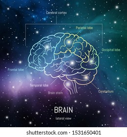 Brain structure. Cerebral cortex, frontal, parietal , occipital and temporal lobes, cerebellum and brain stem scientific medican neuro biology illustration in front of outer space futuritic background