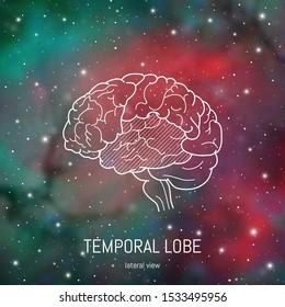 Brain structure. Cerebral cortex, temporal lobe scientific medican neuro biology illustration in front of outer space futuritic background