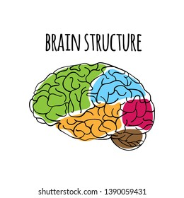 BRAIN STRUCTURE Nervous System Medicine Vector Illustration