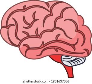 Brain vector art and illustration