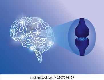brain work is endocannabinoid system