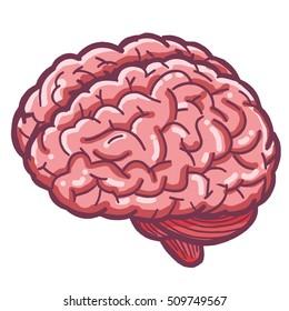 Brain's anatomy cartoon illustration vector.