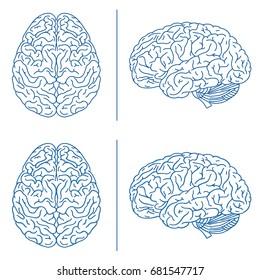 Brains medical info graphics. Hand drawn line art cartoon vector illustration.