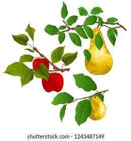Branch apple tree with red apples and branch of pears with yellow ripe pear on white  background watercolor vitage vector  illustration editable hand draw