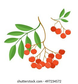 Branch of ash berries isolated on white. Set of color mountain ashes. Bright berries branches.