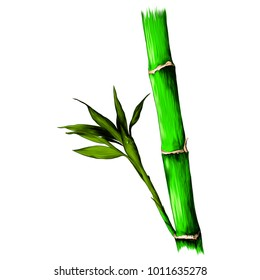 branch of bamboo, sketch vector graphic colored drawing
