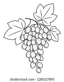 A branch is a beautiful grape berry, a tasty plant. Useful juicy berries. Graphic image. Vector illustration.
