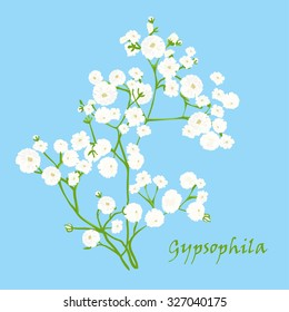 Branch of beautiful hand-drawn gypsophila, natural colors. Vector illustration