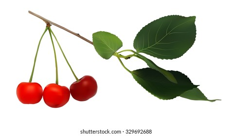 branch with berries and leaves of cherry