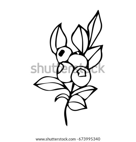 Branch Berries On White Background Vector Stock Vector Royalty Free