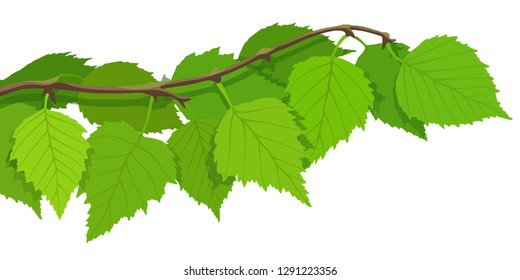 A branch of birch on a white background, bright spring background, vector illustration