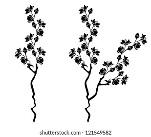Branch of blossom cherry sakura  branch with flowers