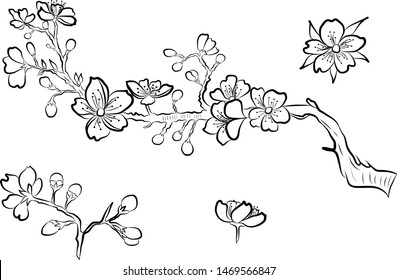 Branch of cherry blossom. hand drawn isolated sakura vector set.
