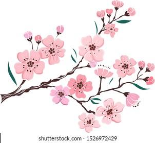 Branch of Cherry blossom on white.Vector illustration Sakura Flower,Nice Peach blossom isolated vector.Japanese floral.