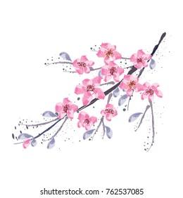 Branch of Cherry blossom , Vector illustration.