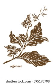 Branch of coffee tree with leaves, flowers and natural coffee beans. Botanical contour drawing. Vector illustration isolated on white background eps.10