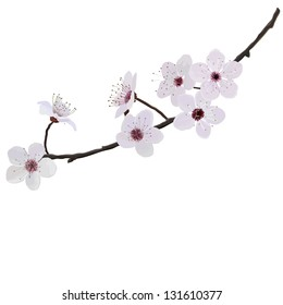 branch with flowers of almond isolated on a white background