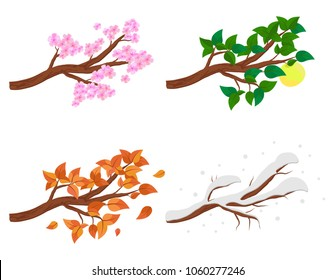Branch in four seasons - spring, summer, autumn, winter. Collection of Apple trees isolated on white background. Green and orange leaves, flowers and snow on the branches isolated. Vector illustration