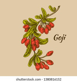 Branch with Goji berries. Color card. Engraving style. Vector illustration.