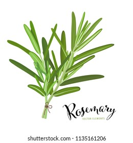 Branch of green rosemary leaves on white background. Vector set of element for advertising, packaging design of condiment products.