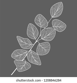 Branch with leaves eucalyptus. Vector illustration.