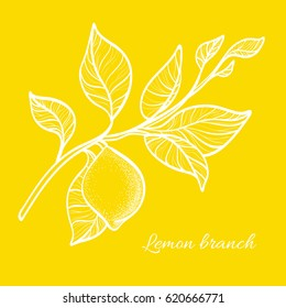 Branch of lemon tree with leaves and natural fruit. Botanical contour drawing. Vector illustration isolated on yellow background eps.10