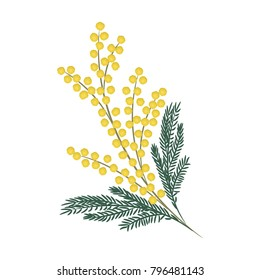 A branch of mimosa on a white background. Spring flowers. It can be used as an design element in projects and compositions. Vector illustration