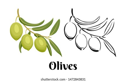 Branch of olives isolated on white background. Color illustration and black and white outline. Vector image of olives in cartoon flat simple style.