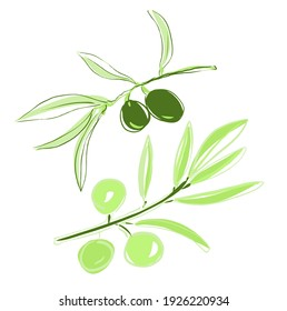 Branch of olives isolated on white background. Handdrawn sketch of olives. Vector illustration. Olive logo or label Hand Draw Sketch. Natural Product emblems with branch.