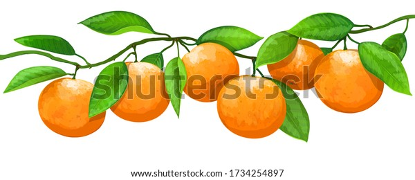 Branch with oranges fruits and leaves isolated on white background. Vector illustration