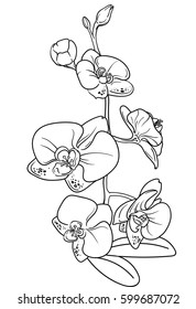 Branch of an orchid. Element of decor. Bouquet in line style. Vector Flower Collection