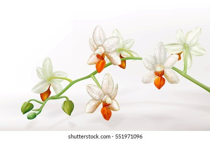 Branch with orchid flowers Phalaenopsis Mini Mark Holm. Vector illustration