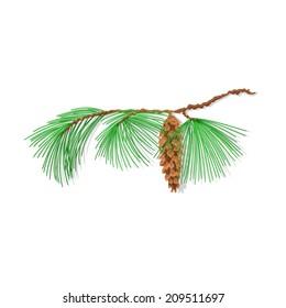 Branch pine Eastern White pine  Christmas tree vector illustration