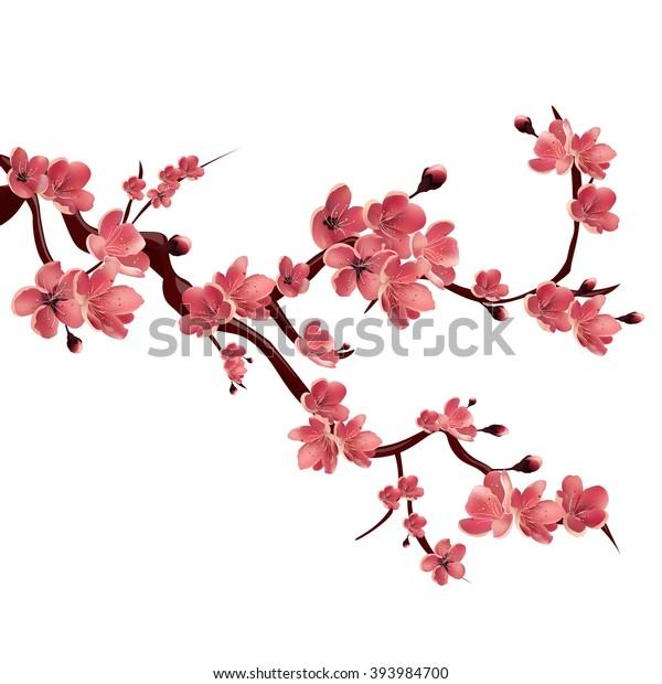 Ветка розового цветущего сакуры. Японская вишня. Изолированная векторная иллюстрация на белом фоне