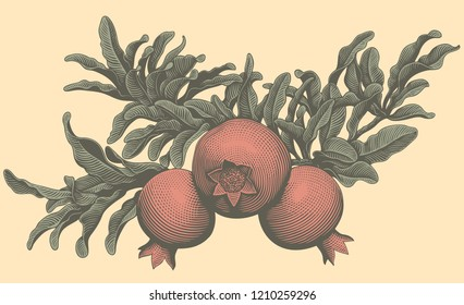 A branch of pomegranates. Hand drawn engraving. Editable vector vintage illustration. Isolated on light background. 8 EPS