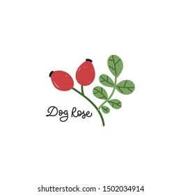 Branch of rose hip berries. Berry collection. Wild rose berries, dog rose. Kitchen textile, package design, logo, print materials