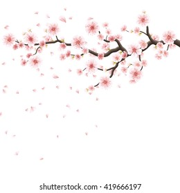 Branch of sakura with flowers. Cherry blossom branch with petals falling isolated on white. EPS 10 vector file included