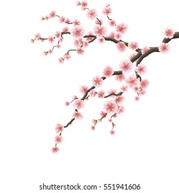 Branch of sakura with flowers. Cherry blossom branch isolated on white. EPS 10 vector file included