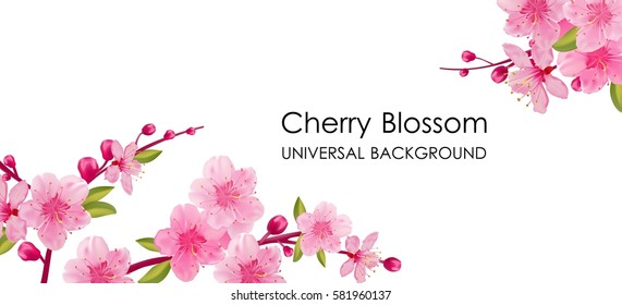 Branch of sakura with flowers and leaves on white background. Cherry blossom spring design.