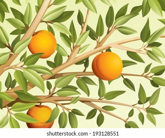 Branch with tree peaches vector illustration