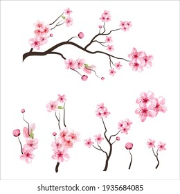 branch tree vector illustration summer clipart autumn clipart nature forest, Background cherry blossom spring flower Japan,  Branch of blooming sakura with flowers, cherry blossom