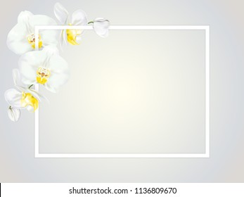 Branch of tropical orchid flower known as moth orchid or white phalaenopsis orchid blossom with yellow middle with white square frame. Vector realistic illustrator.