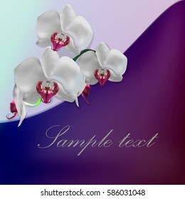 branch of white orchids. Vector illustration