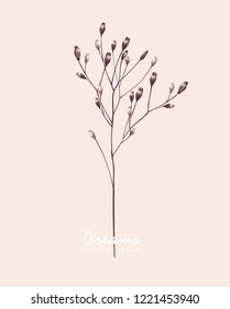 Branch of wild dried flowers. Veclor botanical illustration.