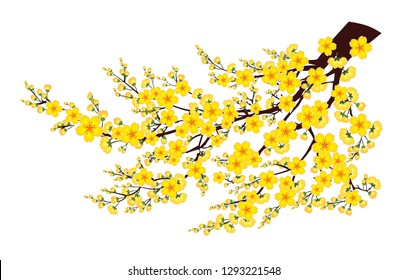 Branch of Yellow Apricot Flower isolate on white background - Vector